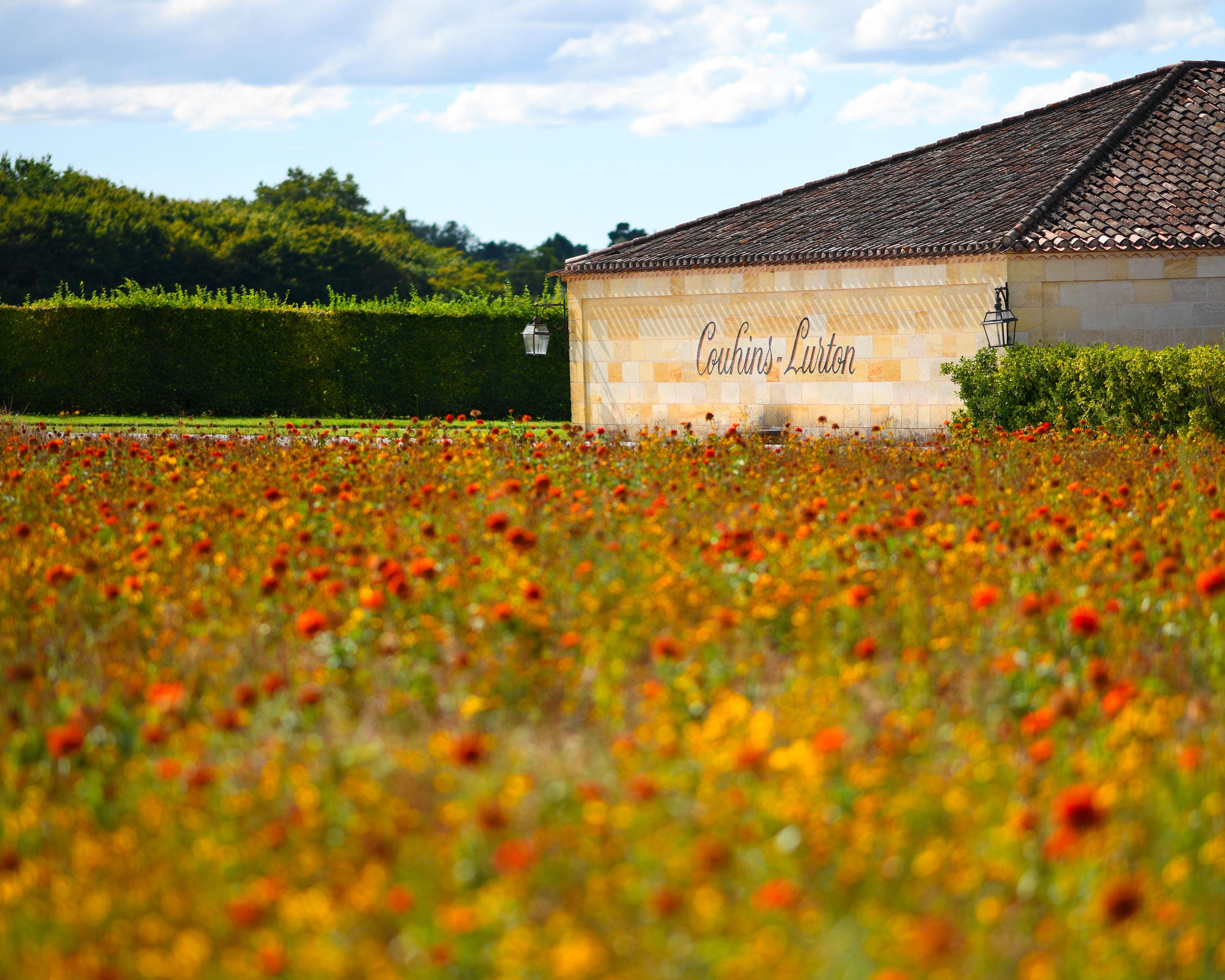 Château Couhins-Lurton : summer fallow