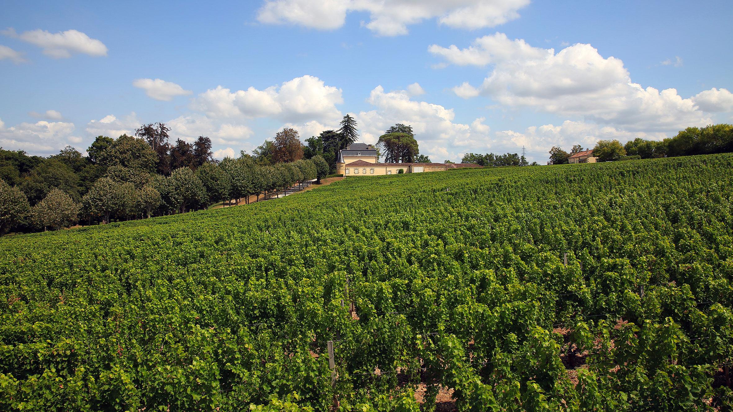 The vineyard at Château Couhins-Lurton